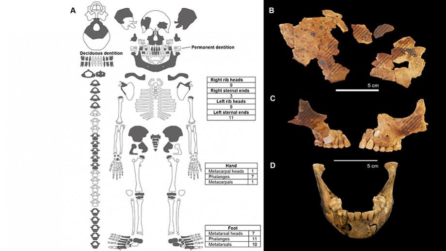 skull and skeletal depiction - web_0.jpg