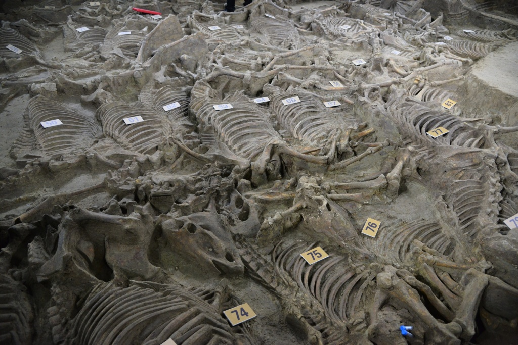 ps_Horse-skeletons-in-situ.-Photo-by-Imaginechina.jpg